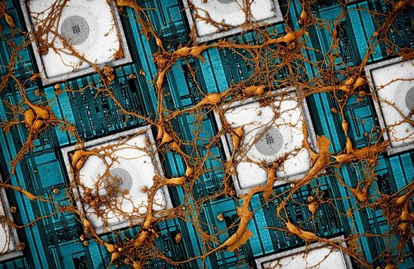 Samsung hé lộ nghiên cứu sao chép não người vào chip - Ảnh 1.