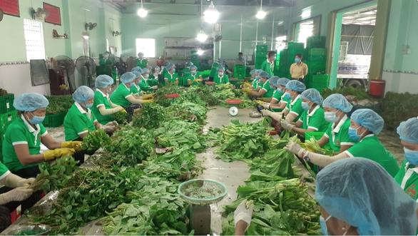 Thêm nhiều đầu mối mua combo nông sản 10kg tại TP.HCM - Ảnh 1.