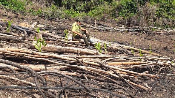 Phú Yên kiểm tra, xử lý toàn bộ các vụ phá rừng ở huyện Sơn Hòa - Ảnh 1.
