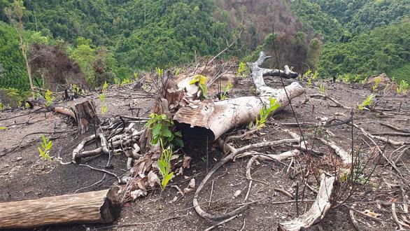 Phú Yên làm rõ phản ảnh cán bộ, cựu lãnh đạo quản lý rừng liên quan đến các vụ phá rừng - Ảnh 1.