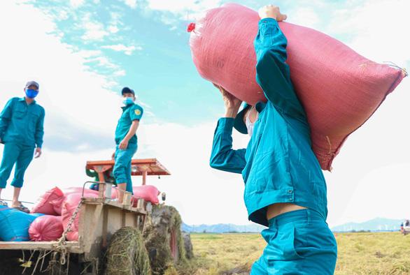 Dân quân tự vệ giúp dân gặt lúa - Ảnh 1.