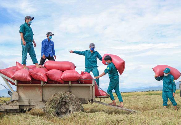 Dân quân tự vệ giúp dân gặt lúa - Ảnh 2.