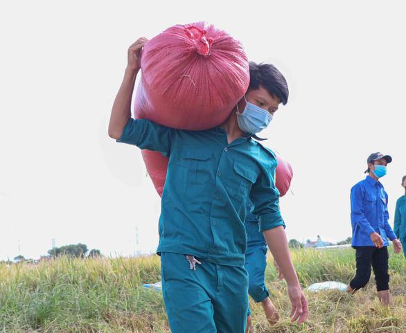 Dân quân tự vệ giúp dân gặt lúa - Ảnh 3.