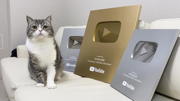 Chú mèo Motimaru ở Nhật lập kỷ lục Guinness được xem nhiều nhất trên YouTube - Ảnh 2.