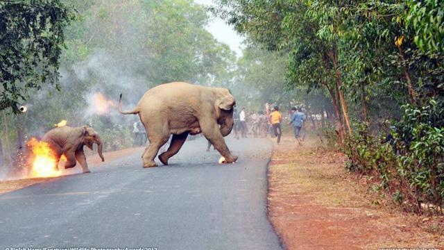 Sốc ảnh mẹ con voi bị ném xăng bốc cháy - Ảnh 1.