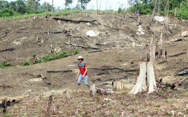 Chiếm dụng đất rừng trái phép, nhiều cán bộ Đắk Nông bị kỷ luật - Ảnh 1.