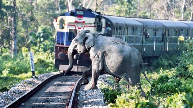Sốc ảnh mẹ con voi bị ném xăng bốc cháy - Ảnh 2.