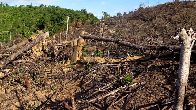 Khởi tố vụ phá hơn 20ha rừng phòng hộ tại Bình Định - Ảnh 1.