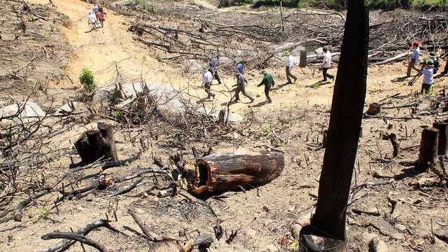 Bắt chủ công ty nghi chủ mưu vụ phá rừng ở Bình Định - Ảnh 1.