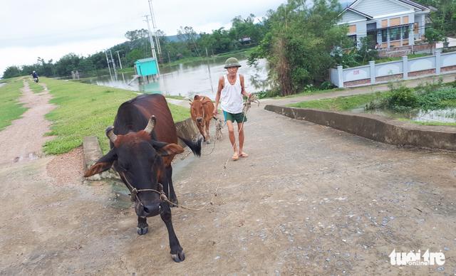 Nước sông Lam dâng nhanh, dân hối hả chạy lụt - Ảnh 10.