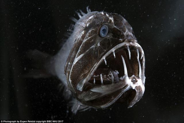Nghẹt thở sinh vật biển sống động trong Blue Planet II - Ảnh 4.
