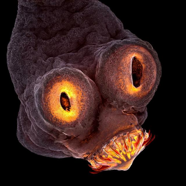 Thế giới nhỏ bé sống động qua kính hiển vi - Ảnh 4.