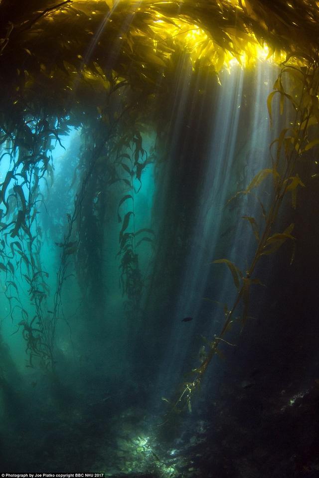 Nghẹt thở sinh vật biển sống động trong Blue Planet II - Ảnh 6.