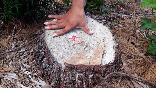 Xác định đối tượng liên quan đến vụ phá rừng đặc dụng ở Huế - Ảnh 2.