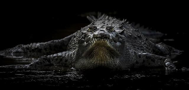 Thức ăn chăn nuôi làm đổi giới tính cá sấu? - Ảnh 1.