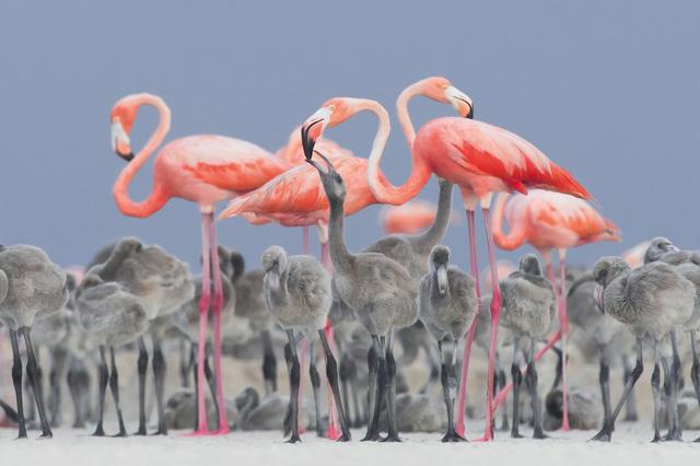 Ngắm thế giới chim chóc kỳ thú đoạt giải ảnh quốc tế - Ảnh 1.