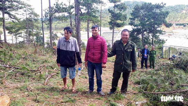 Bắt hai người trong nhóm lâm tặc chặt 20 cây thông 40 tuổi - Ảnh 1.