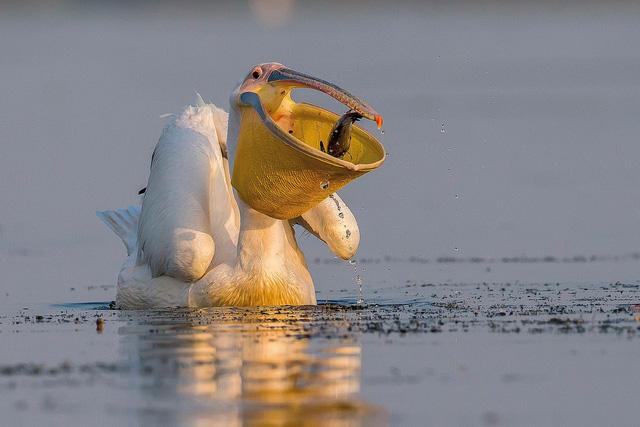 Ngắm thế giới chim chóc kỳ thú đoạt giải ảnh quốc tế - Ảnh 14.