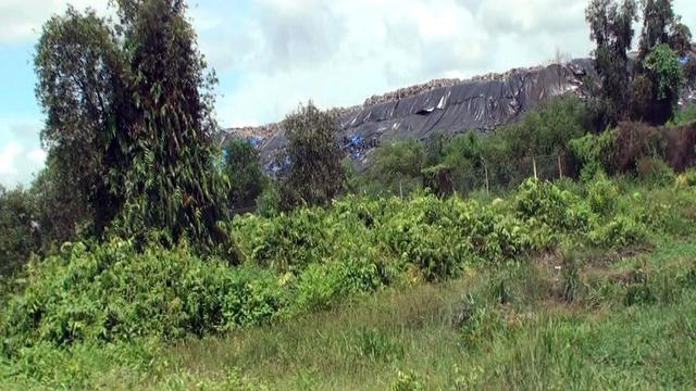 TP.HCM tiếp nhận xử lý 100 tấn rác mỗi ngày cho tỉnh Long An - Ảnh 1.