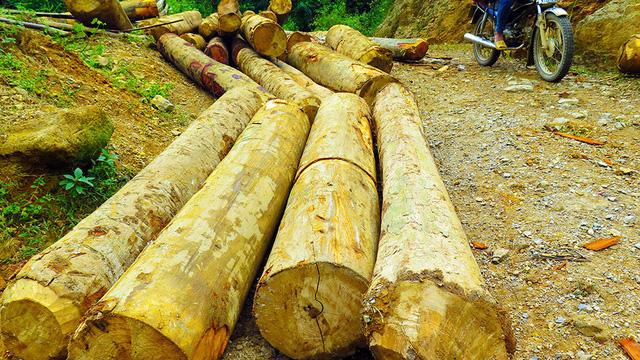 Tan nát rừng đầu nguồn - Kỳ 1: Tàn phá rừng phòng hộ - Ảnh 7.