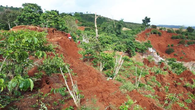 Sụt lở đất nghiêm trọng, chôn vùi 10ha cà phê ở Lâm Đồng - Ảnh 2.