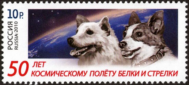 60 năm trước, chó Laika bay vào vũ trụ - Ảnh 2.