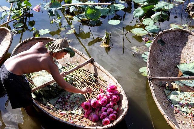 Hà Nội: Quận Tây Hồ xây dựng không gian thưởng thức trà sen - Ảnh 1.