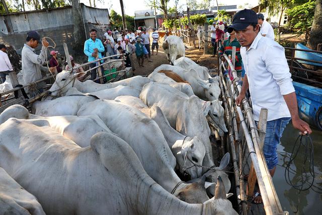Về An Giang coi chợ bò mùa nước nổi - Ảnh 4.