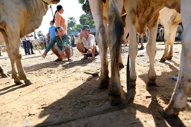 Về An Giang coi chợ bò mùa nước nổi - Ảnh 6.
