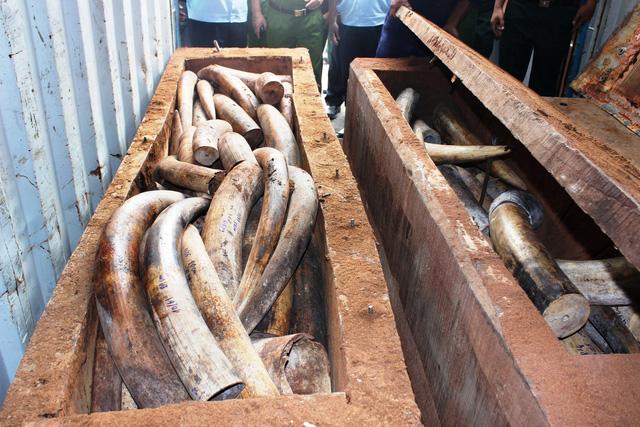 Tạm đình chỉ điều tra 4 vụ buôn lậu ngà voi - Ảnh 1.
