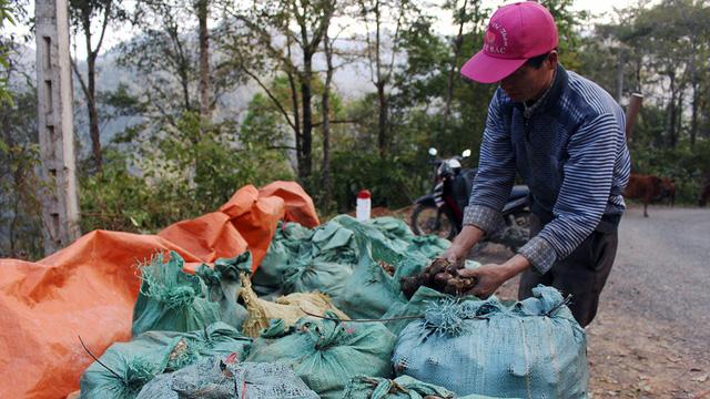 Giá dong tại thủ phủ rớt mạnh, mỗi ký chỉ còn 1.000 đồng - Ảnh 3.