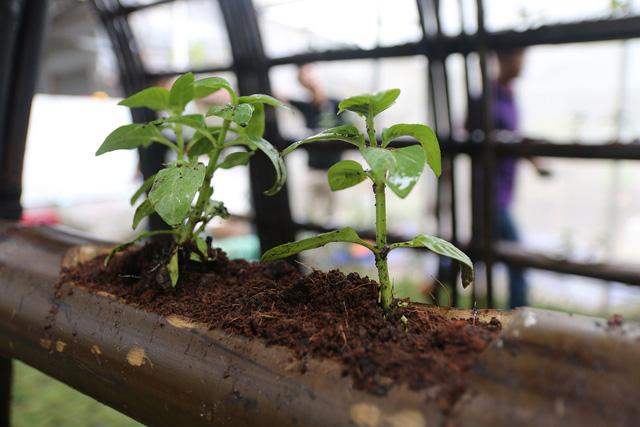 Nhà rau bằng tre và cỏ tranh giữa Sài Gòn của cô gái Ấn - Ảnh 5.