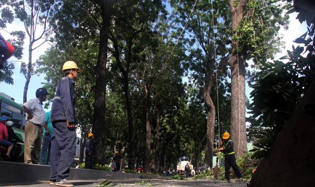 TP.HCM cho đấu thầu chăm sóc, quản lý cây xanh đô thị - Ảnh 1.