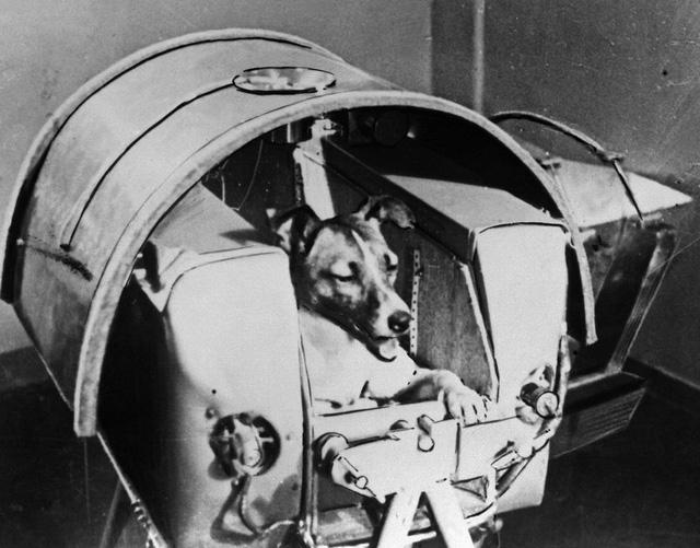 Sinh vật đầu tiên bay vào vũ trụ