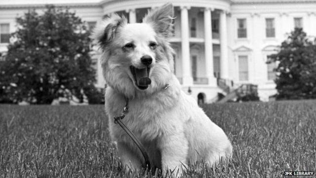 60 năm trước, chó Laika bay vào vũ trụ - Ảnh 3.