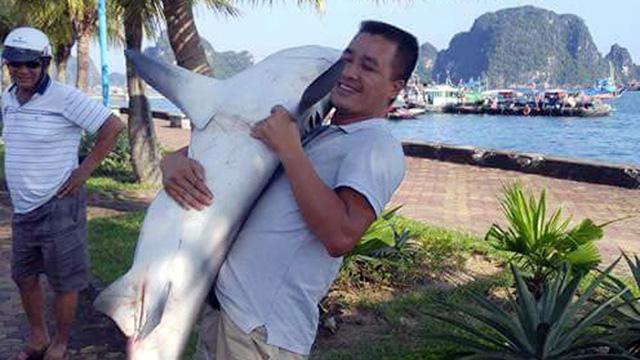 Không có chuyện cá mập tấn công người ở Hạ Long - Ảnh 3.