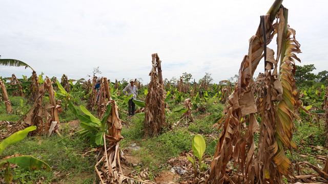 Khởi tố giám đốc hủy hoại 49ha rừng ở Đắk Lắk - Ảnh 1.