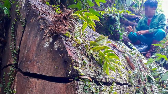 Tan nát rừng đầu nguồn - Kỳ 1: Tàn phá rừng phòng hộ - Ảnh 1.