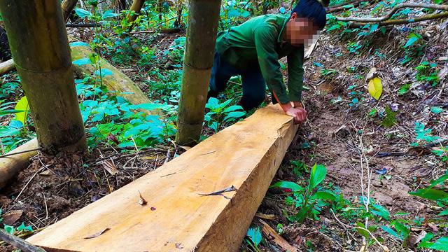 Tan nát rừng đầu nguồn - Kỳ 1: Tàn phá rừng phòng hộ - Ảnh 6.