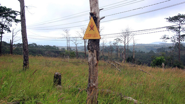 Bắt tạm giam chủ tịch xã bán rừng cho doanh nghiệp - Ảnh 1.