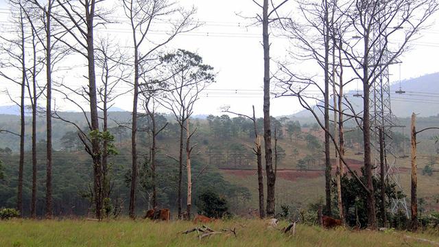 Bắt tạm giam chủ tịch xã bán rừng cho doanh nghiệp - Ảnh 2.