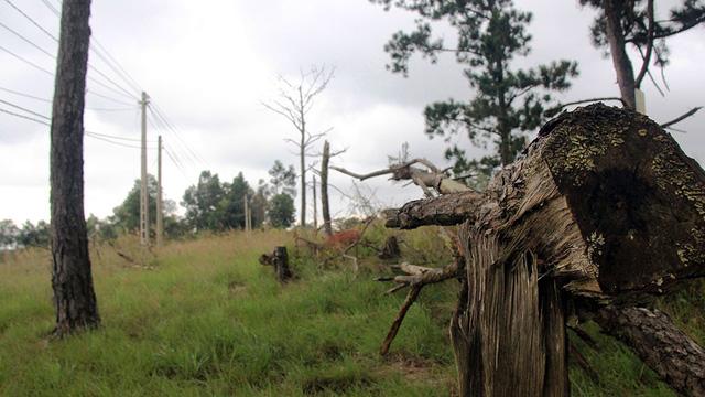 Bắt tạm giam chủ tịch xã bán rừng cho doanh nghiệp - Ảnh 3.