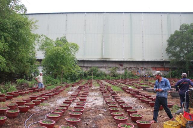 Đà Nẵng: Đau đầu với hai nhà máy thép - Ảnh 5.