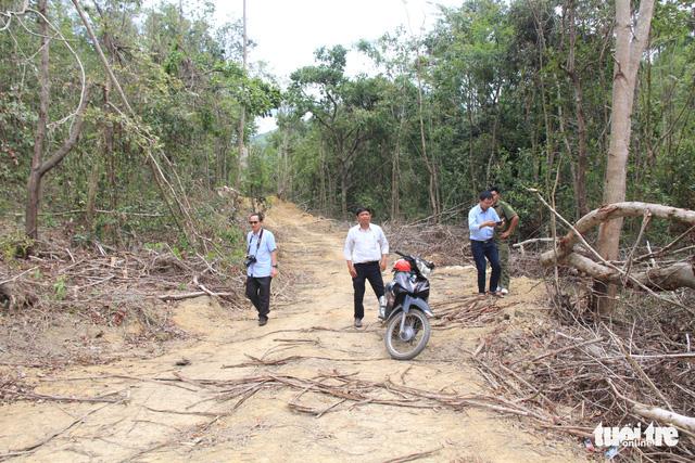 Giám định thiệt hại vụ lợi dụng chủ trương tận thu để phá rừng - Ảnh 2.