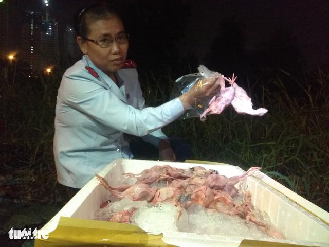 Chim cút lậu đi Tiền Giang, bị bắt ở Sài Gòn - Ảnh 1.