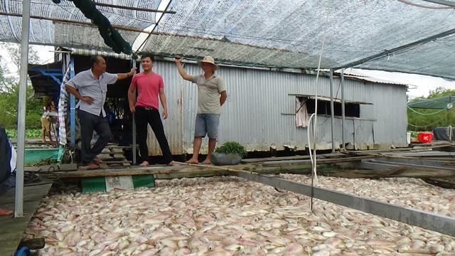 Người nuôi cá khóc ròng, vớt cá chết bán 1000 -2000 đồng/kg - Ảnh 1.
