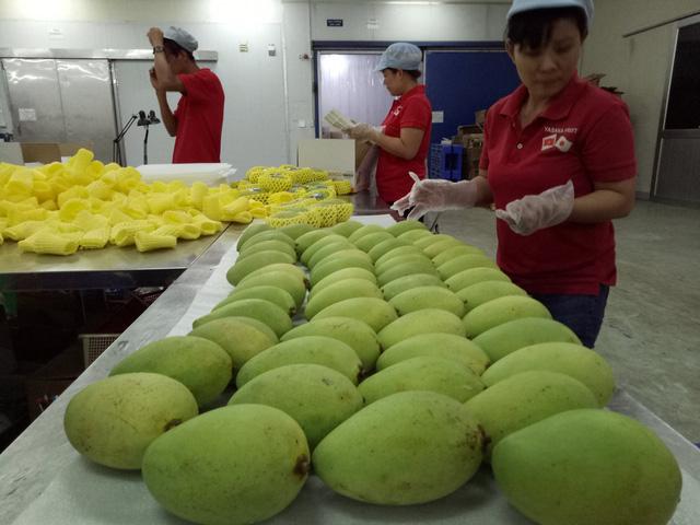 Cả ngành rau quả VN xuất khẩu thua trái kiwi của New Zealand - Ảnh 2.