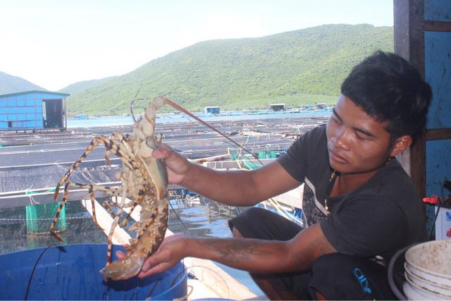 Tảo độc xuất hiện dày đặc trên vịnh Vân Phong - Ảnh 1.