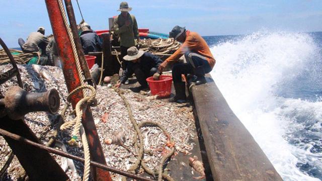 Việt Nam mong EU sớm gỡ thẻ vàng với thủy hải sản - Ảnh 1.