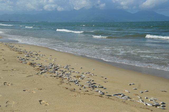Vụ cá chết trắng biển Đà Nẵng: đề nghị giám sát việc dùng mìn đánh cá - Ảnh 1.